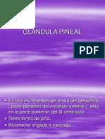 1. Glándula Pineal