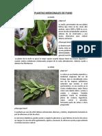 Las Plantas Medicinales de Puno