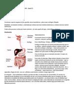 Fisiología Gastrointestinal 1