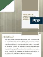 Principios de Mendel 2