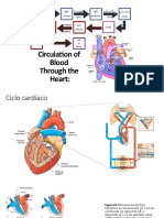 Aparato Cardiovascular 2da