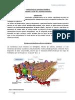 membrana biología08 cbc