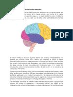 Principales funciones ejecutivas del lobulo frontal
