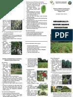 MangoProduction.pdf