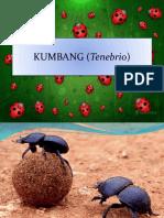 Kum Bang