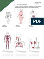 2º Año - Ficha de trabajo - Sistemas corporales - 2013.pdf