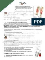 Ficha 3 S. Muscular Modificada 2012