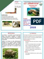 diptico de tortuga N 2.docx