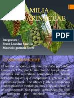 Familia Casuarinaceae