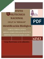 Marco Teorico Identificacion