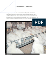Pollos Parrilleros