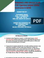 dissertation.pptx