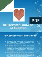 Clase 6 Neuropsicologia de La Afectividad