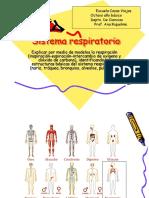 Sistema respiratorio, 5to.ppt