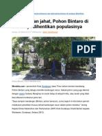 Bahaya Pohon Bintaro