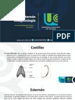 Costillas- Esternon