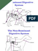 Animal Nutrition.ppt