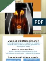 17 Sistema Urinario