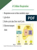 Cellular-Respiration-STEPS.pdf