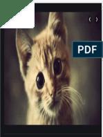 Cat w 347956