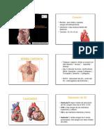 Generalidades Del Sistema Cardiovascular PDF