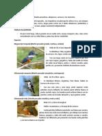Orden Coraciiformes- Informe
