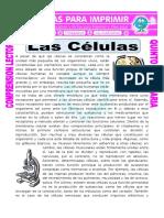 Ficha de estudio 5to basico Las Células