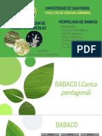 BABACO.pptx