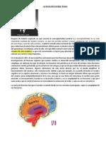 La Teoría Del Cerebro Triuno