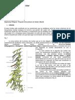 Anatomía Del Plexo Lumbar