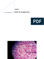 resumen histologia