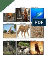 Animales salvajes Y DOMÉSTICOS EN Q´eqchi´
