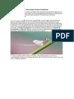 Entomología Acuática Simplificada.docx