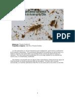 Entomologia Sur de Chile.docx