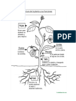 Ciencias Naturales 3ero Estructura de La Planta