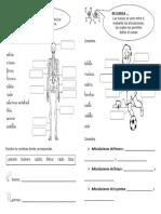 Esqueleto y Articulaciones