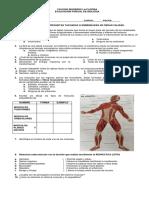 Parcial Musculos