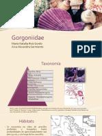 Gorgoniidae