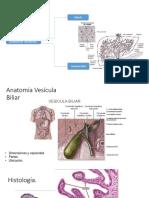 Vesícula Biliar Patologgía
