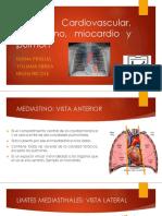 Tórax Cardiovascular, Mediastino, Miocardio y Pulmón