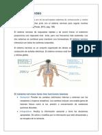 sistema nerviosos 1.docx