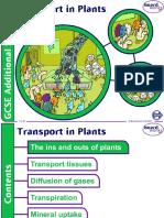 boardworks_transport_in_plants.ppt