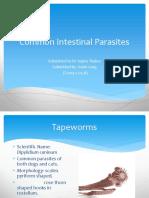 Common Intestinal Parasites anish.pptx