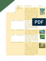 TAREA 1 ERAS GEOLOGICAS.docx