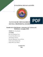 Descripcion de cactaceas mollebaya.docx