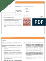 Estructura-y-Funcion-de-la-Piel 3 paginas.pdf