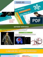 Diapositivas Sistema Nervioso