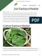 Como Cultivar Espinaca Malabar de manera sencilla y rapida.pdf