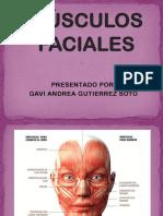 Musculos Faciales-1 6747