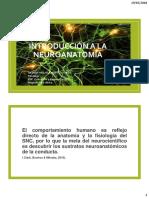 Estructura y Organización de La Corteza Cerebral